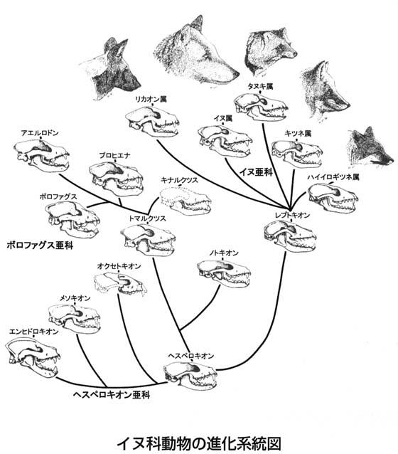 人類進化の行進図 (じんるいしんかのこうしんず)と …